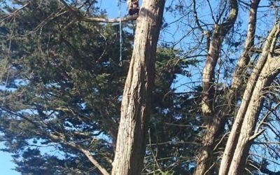 Tall Trees news