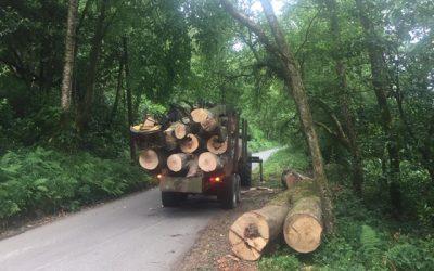 Very big pieces of timber